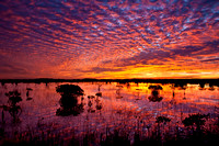 Everglades Sunrise, Florida