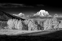 Mount Moran and Aspen, B&W
