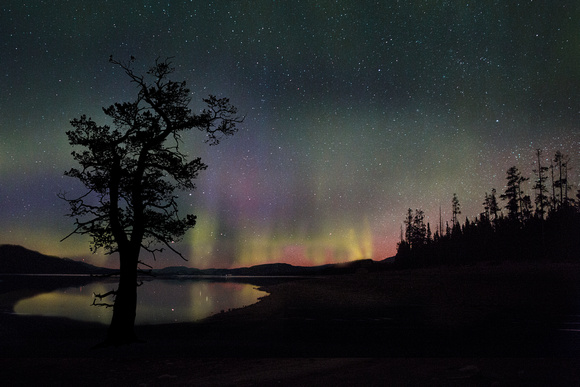 Aurora over Jackson Lake