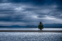 Lone Pine, Yellowstone Lake